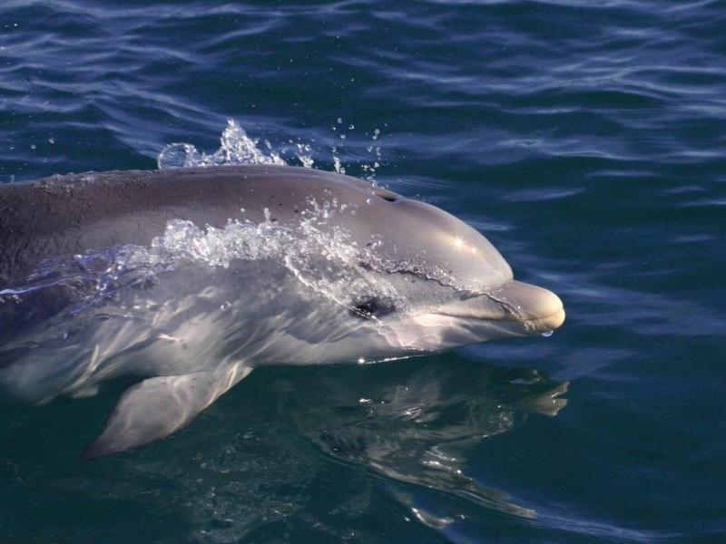 Dolphins at your doorstep - the only innercity dolphin sanctuary in the world!