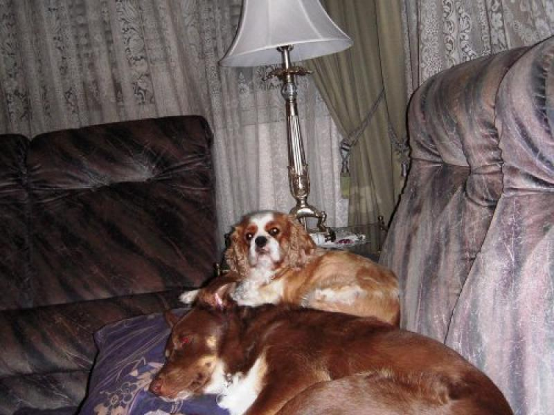 Jack and Kate, the fur kids