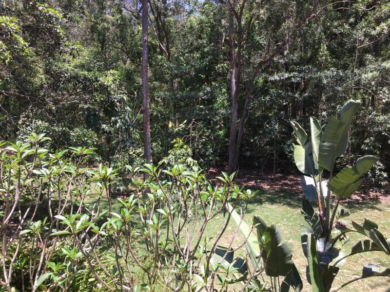Garden outlook from bedroom window
