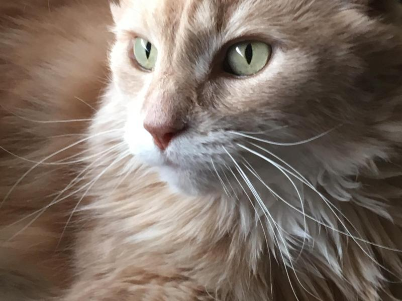 Sunny the Cat