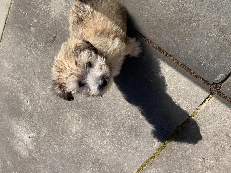 My small dog