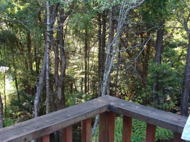 This picture is taken from our deck looking into the native bush around our home.
