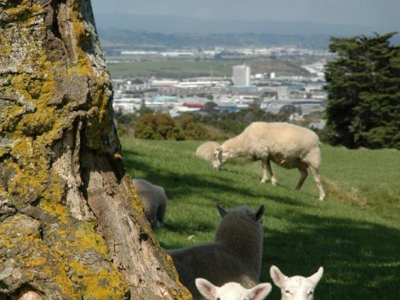 One Tree Hill, Auckland, Auckland, Auckland, New Zealand Homestay