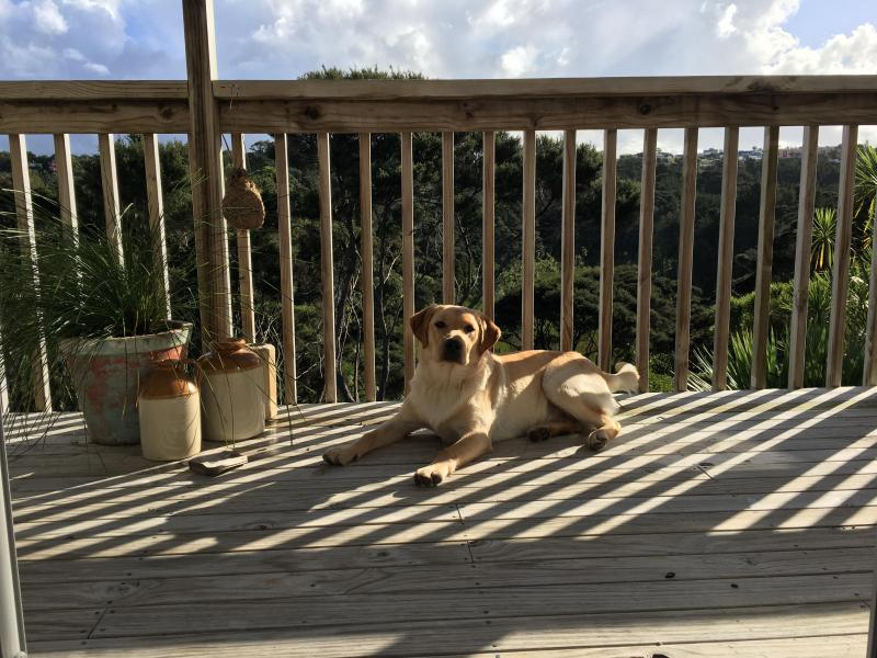 Balcony off upstairs bedroom and our puppy, Rocko
