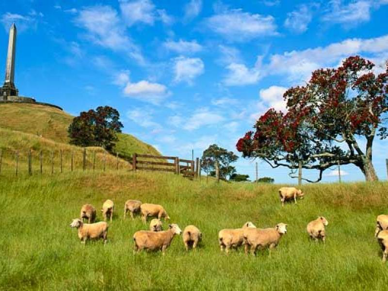 One Tree Hill - best central park in Auckland