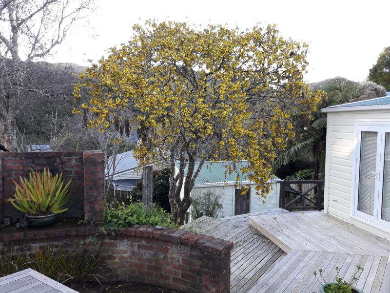 Garden is filled with Tui & Kaka at this time of year